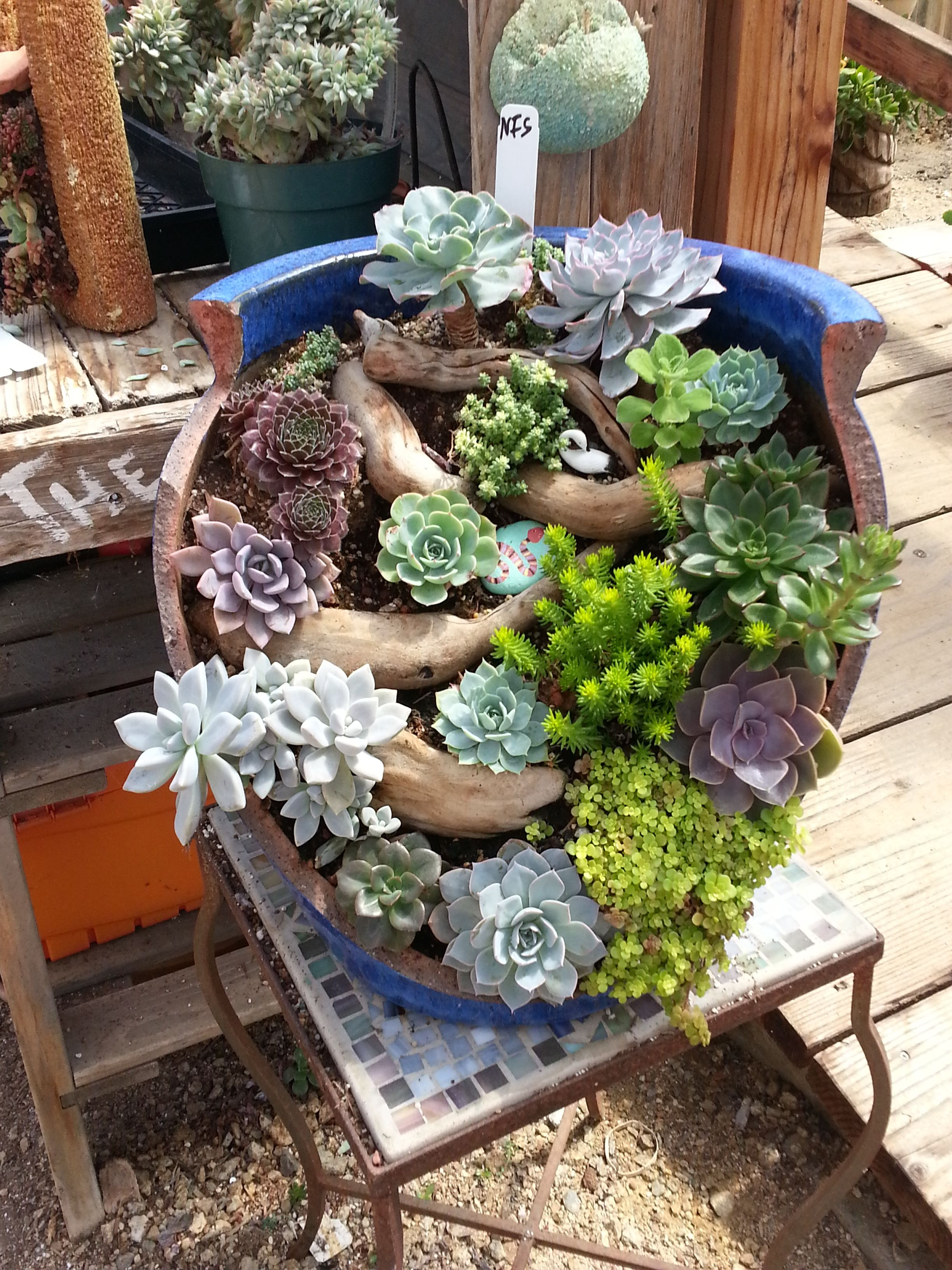 I Saw This At Succulents Gardens In Moss Landing And