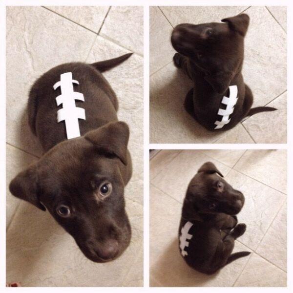 10 Fang Tastically Easy Diy Pet Costumes Cute Dog Costumes Pet