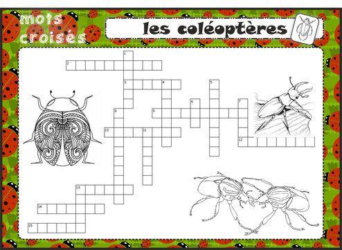 les petites b tes du jardin gs cp nature et decouverte insectes. Black Bedroom Furniture Sets. Home Design Ideas