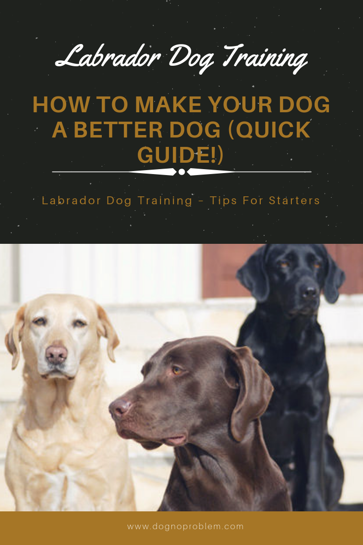 Labrador Dog Training How To Make Your Dog a Better Dog
