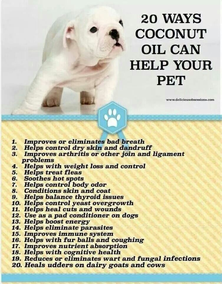 Benefits Of Coconut Oil For Dogs Talk To Your Vet Before Trying