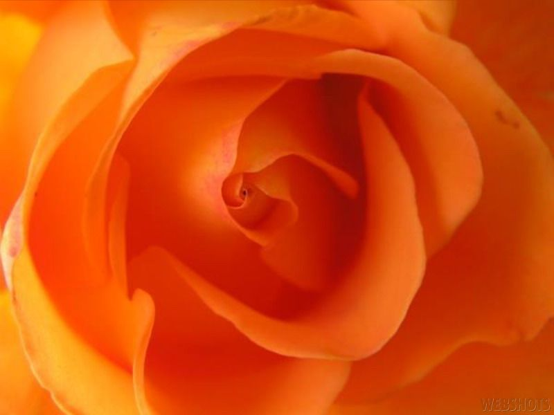 The Colour Of The Rose Has A Hidden Meaning Rose Rose Pictures Color Therapy