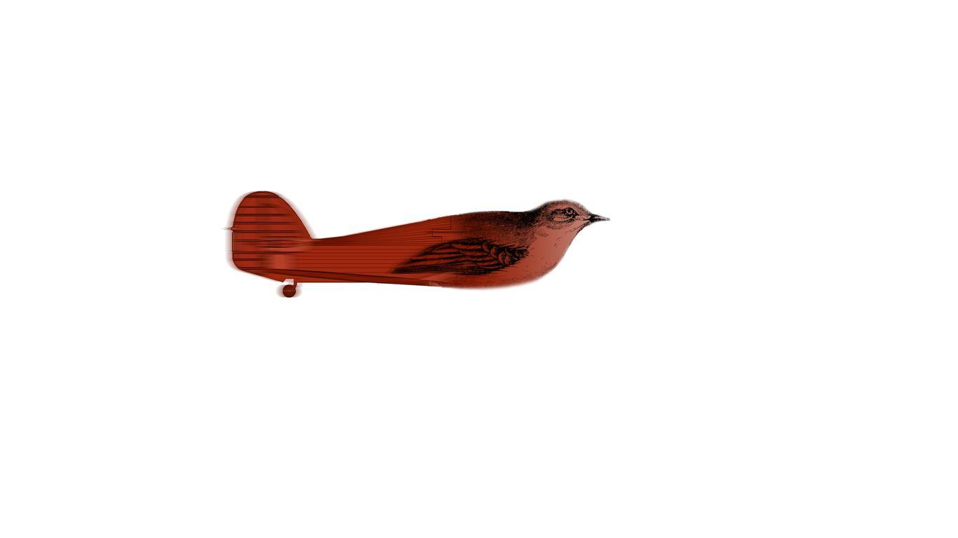22, pájaro, avión, cola, ...