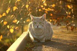 Kissa, Syksy, Syksyllä Lehdet