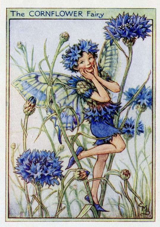 Cornflower Flower Fairy, c.1950, by Cicely Mary Barker
