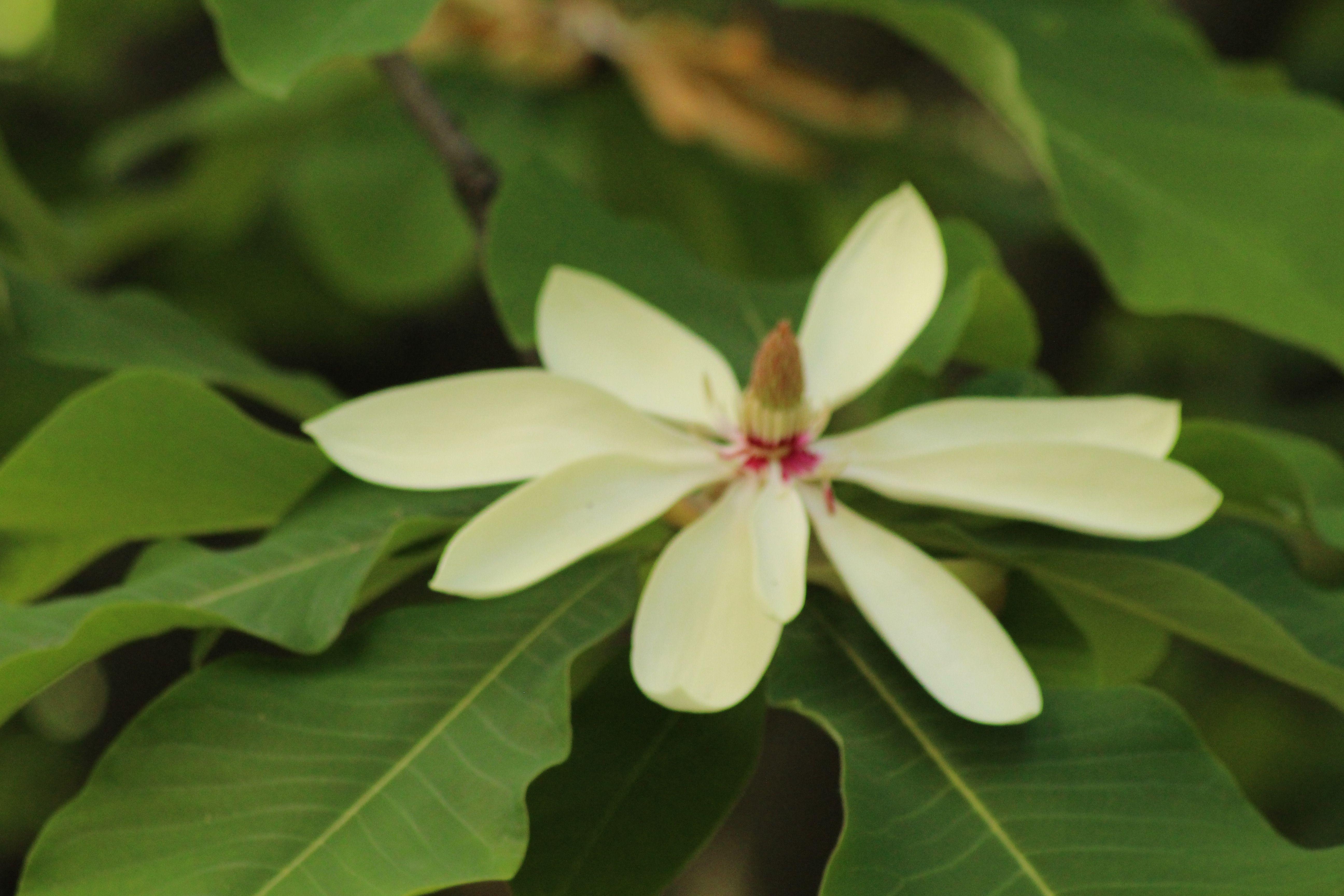 Rododendron Wojslawice 2016 Plants Ona
