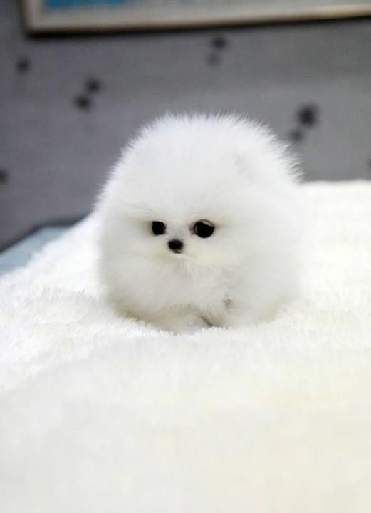 15 Pets That Look So Much Like Food It Will Make You Uncomfortable Cute Animals Cute Baby Animals Cute Animal Pictures