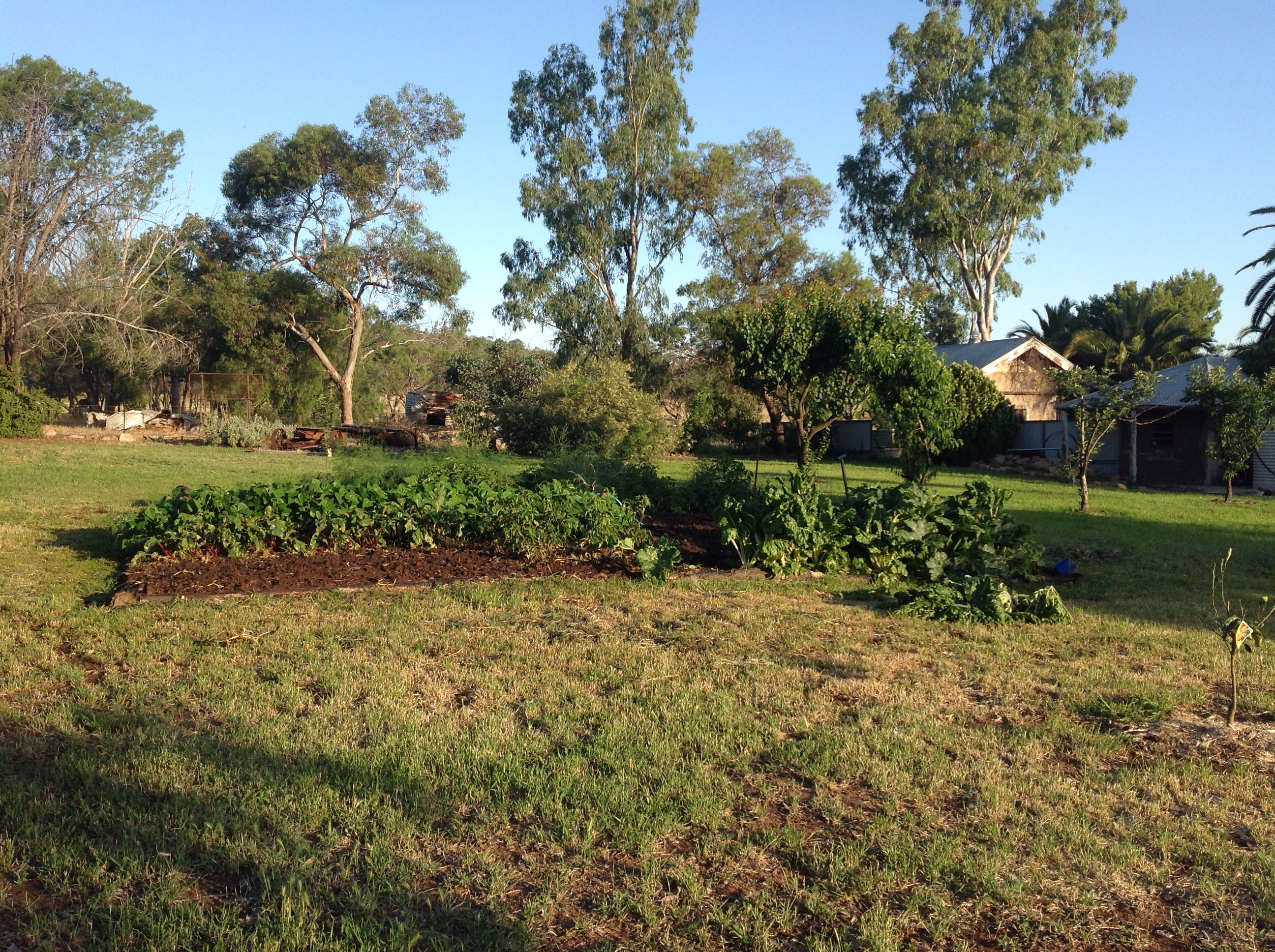 Backyard vehicle garden