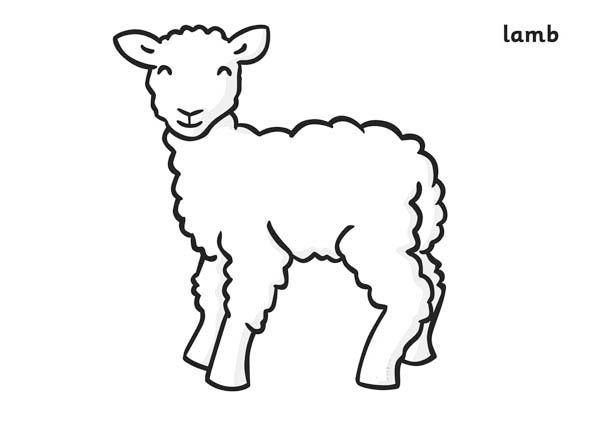 Spring Lamb Coloring Page Spring Lambs Coloring Pages Lamb