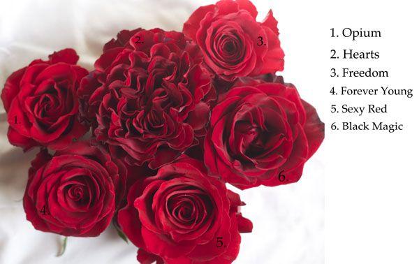 Red Roses Varieties Flower Names Ivory Flowers Flowers