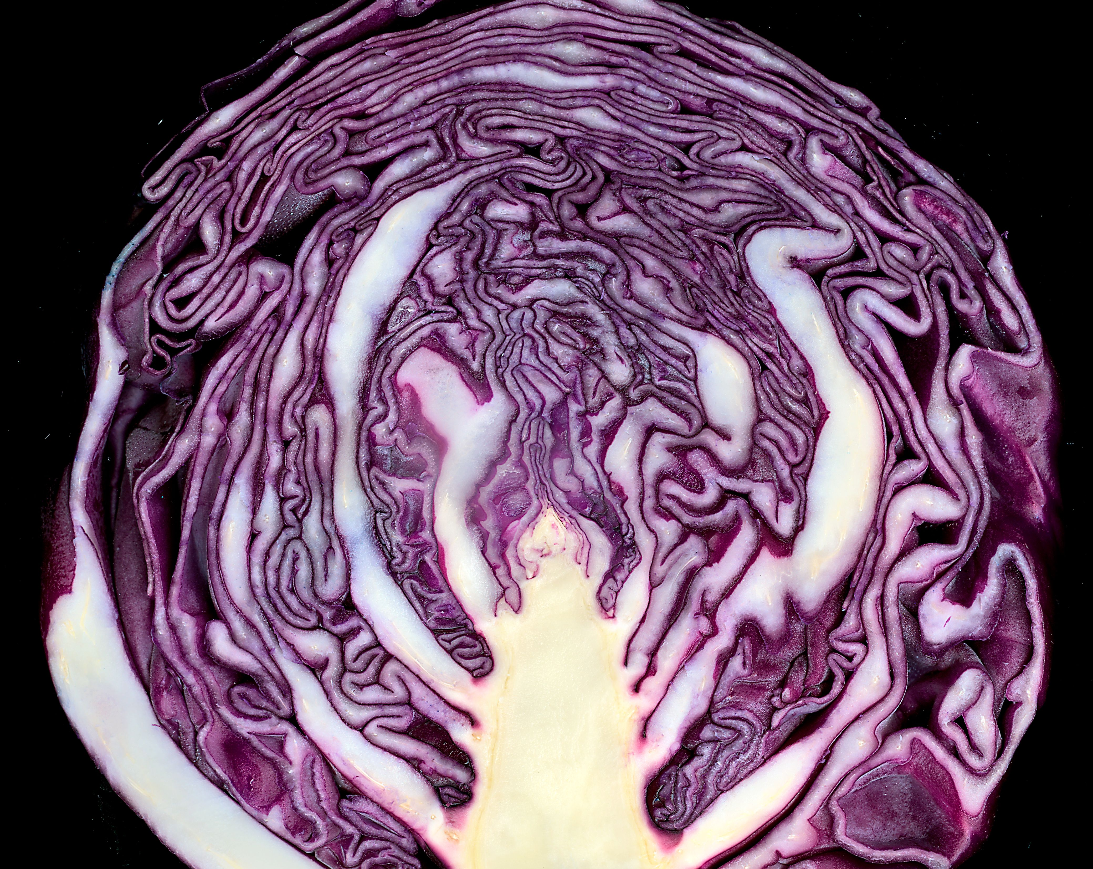 Red (or purple) cabbage.