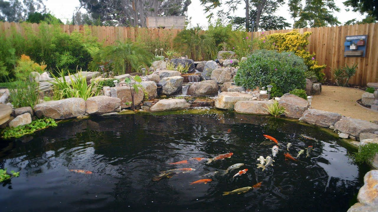 How To Build A Koi Pond Final Diy Koi Pond