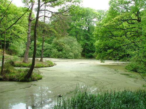 For t de rambouillet les mares de vilpert yvelines for Jardin anglais rambouillet
