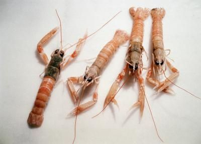 What Are the Different Kinds of Lobsters? | Baby animals ...
