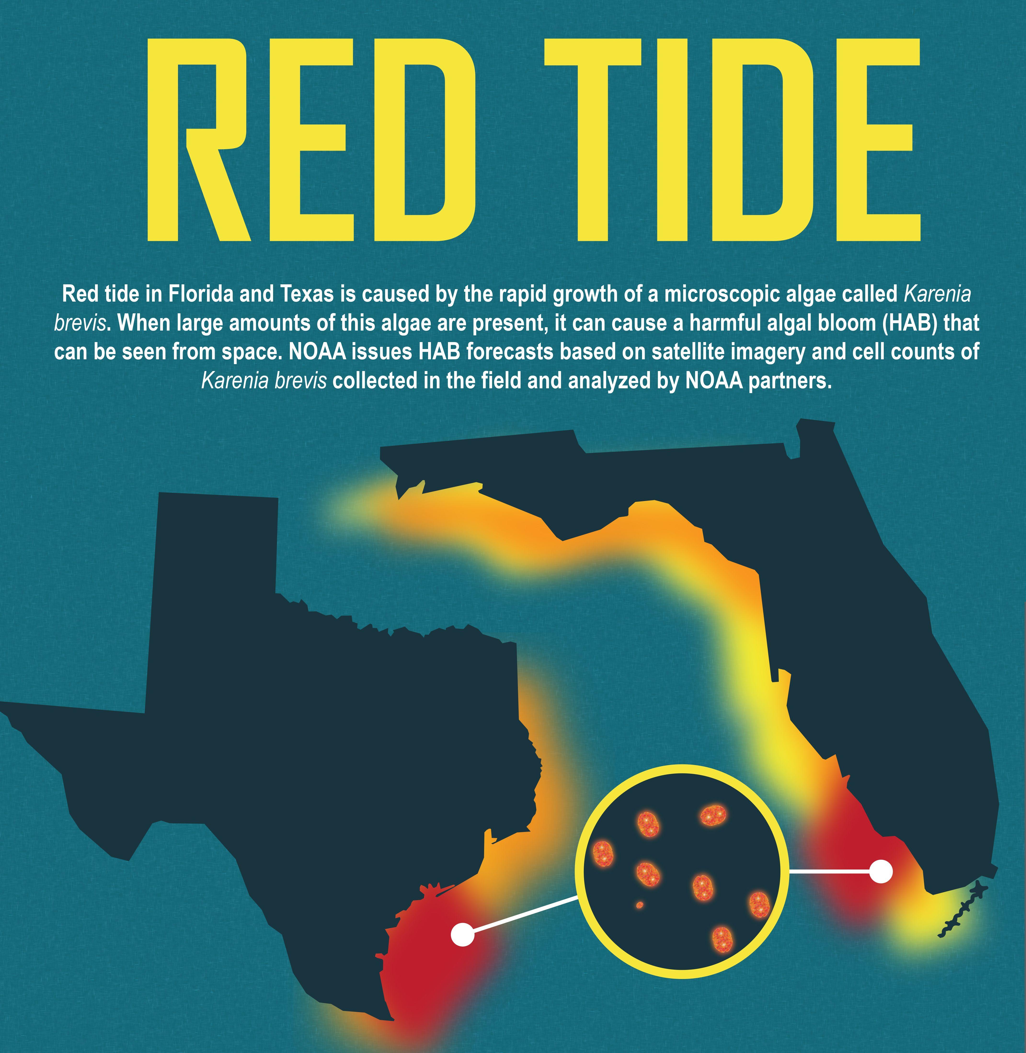 illustration of redtide Noaa, Florida, Department of