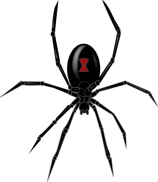 Black Widow Spider Black Widow Spider Widow Spider Black Widow Marvel