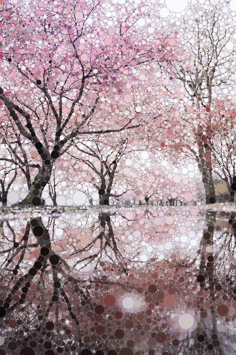 Spring Pink Sakura Colorful Landscape Botanical Wall Art Blossom Trees