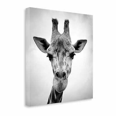 Giraffe By Photoinc Studio  Gallery Wrap Canvas  26