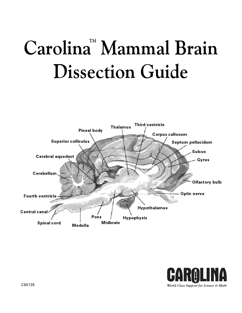 Carolina Mammal Brain Dissection :: carolina.com | Dissection ...