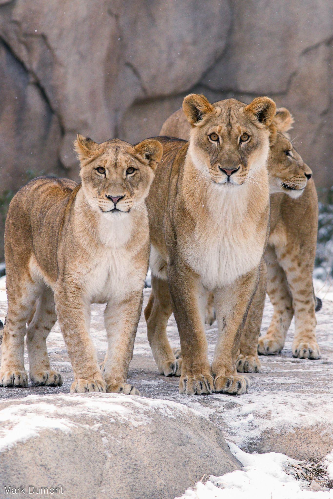 234A6558Edit.jpg Cincinnati zoo, Wildlife animals, Big cats