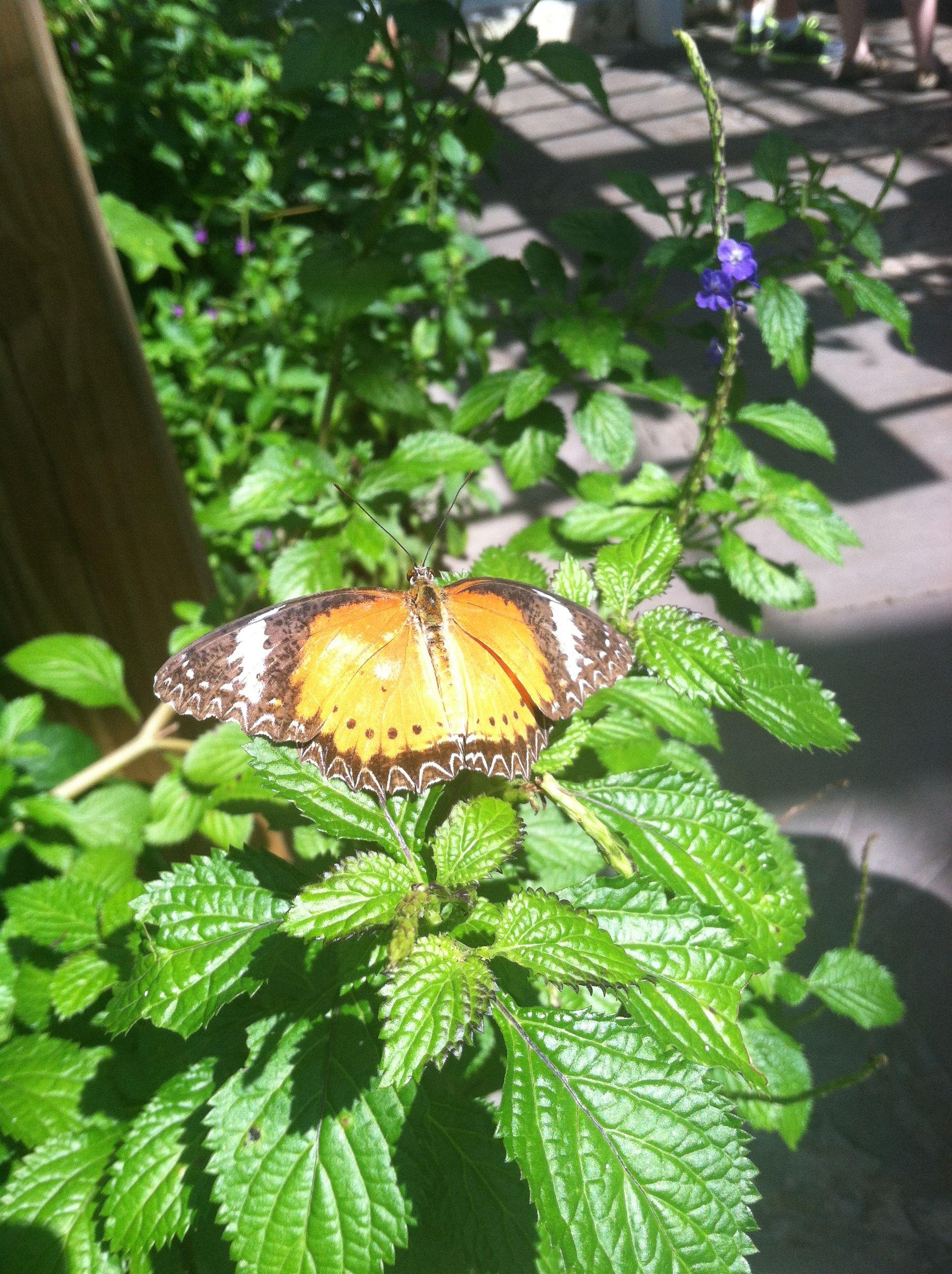 Butterflies At Fairchild Botanical Garden, Miami