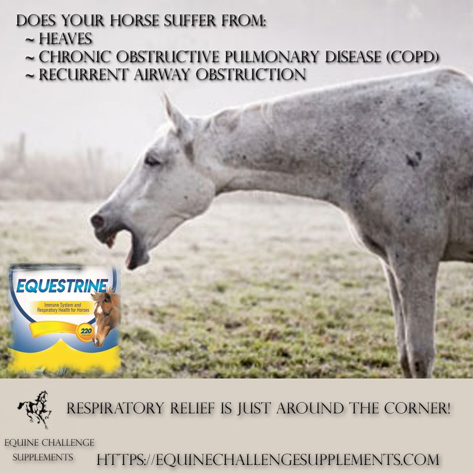 Equine Respiratory Relief Heaves Copd In 2020 Copd Equine Nutrition Chronic Obstructive Pulmonary Disease