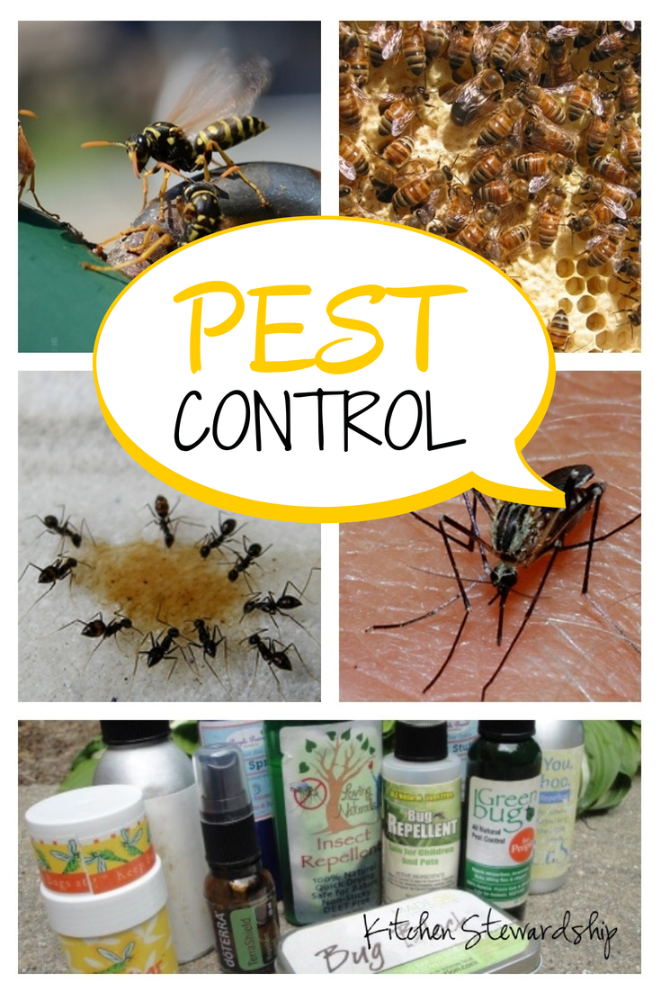 Natural Pest Control Inside And Out Via Kitchen Stewardship Natural Pest Control Pest Control Organic Pest Control
