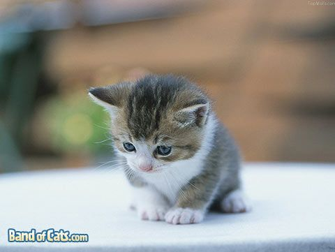 Hottest Desktop Wallpaper For Cat Lovers Pictures Of Cats Kittens Cutest Baby Cute Animals Cute Cat Wallpaper