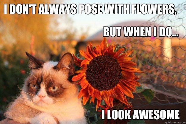 Erinire A Grumpy Cat Humor Angry Cat Cat Memes