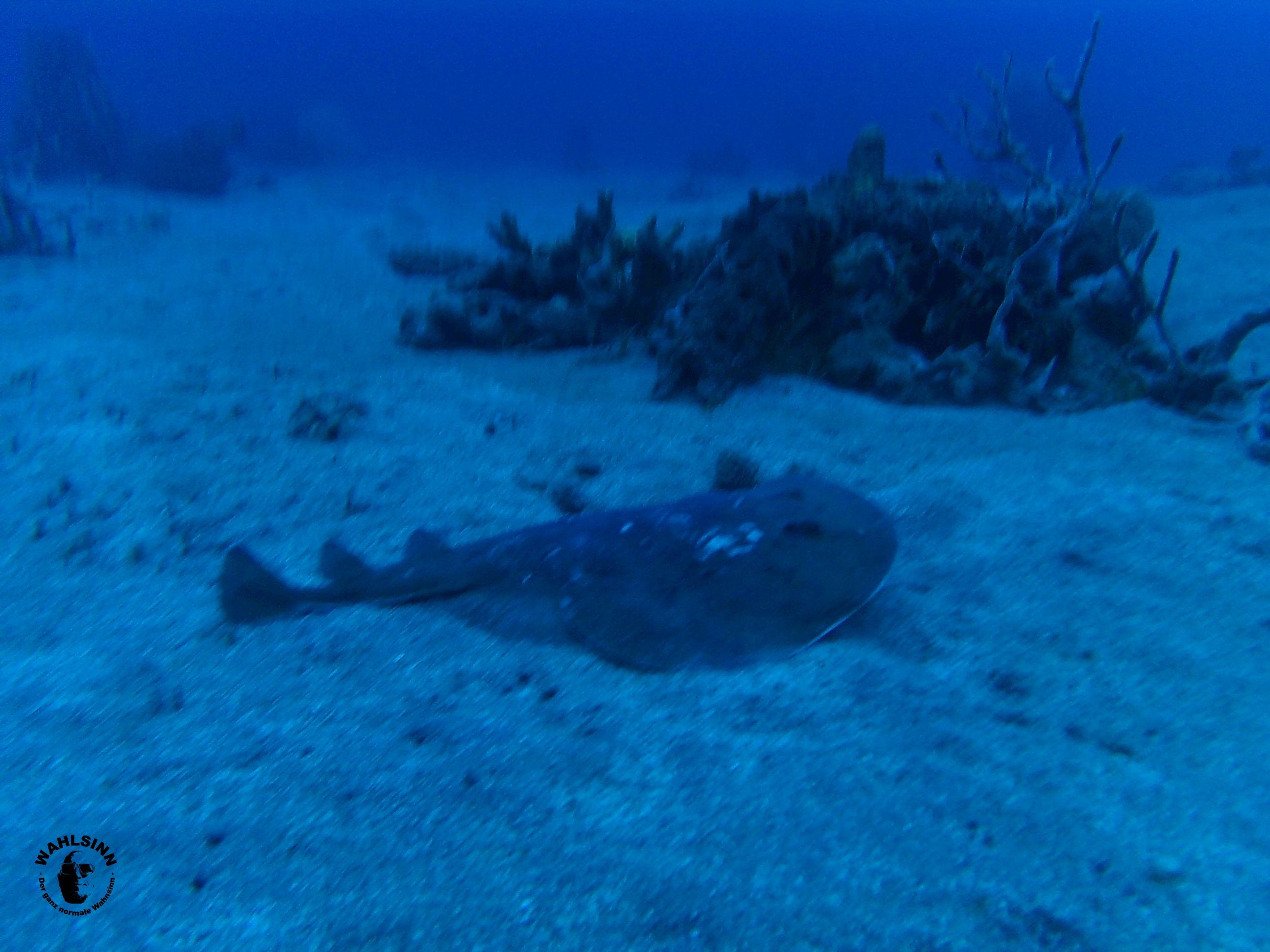 Dominica - Auch die Unterwasserlandschaft ist Wunderschön auf Dominica