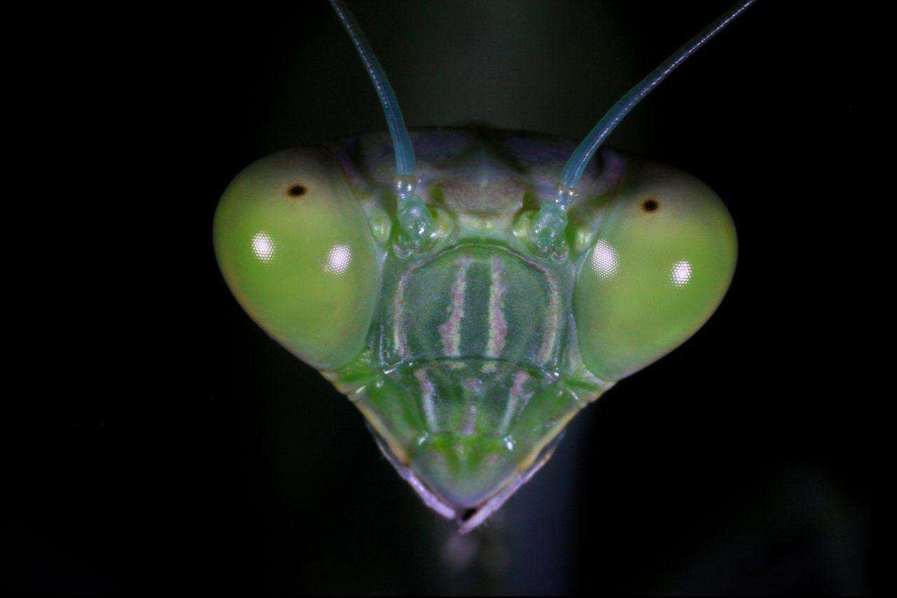 Elaine Strutz hat die Köpfe verschiedenster Insekten auf Augenhöhe oder besser Augennähe gebracht. Faszinierend, wie komplex die Köpfe mancher Insekten aussehen, wenn man sie von ganz nah betrachten kann