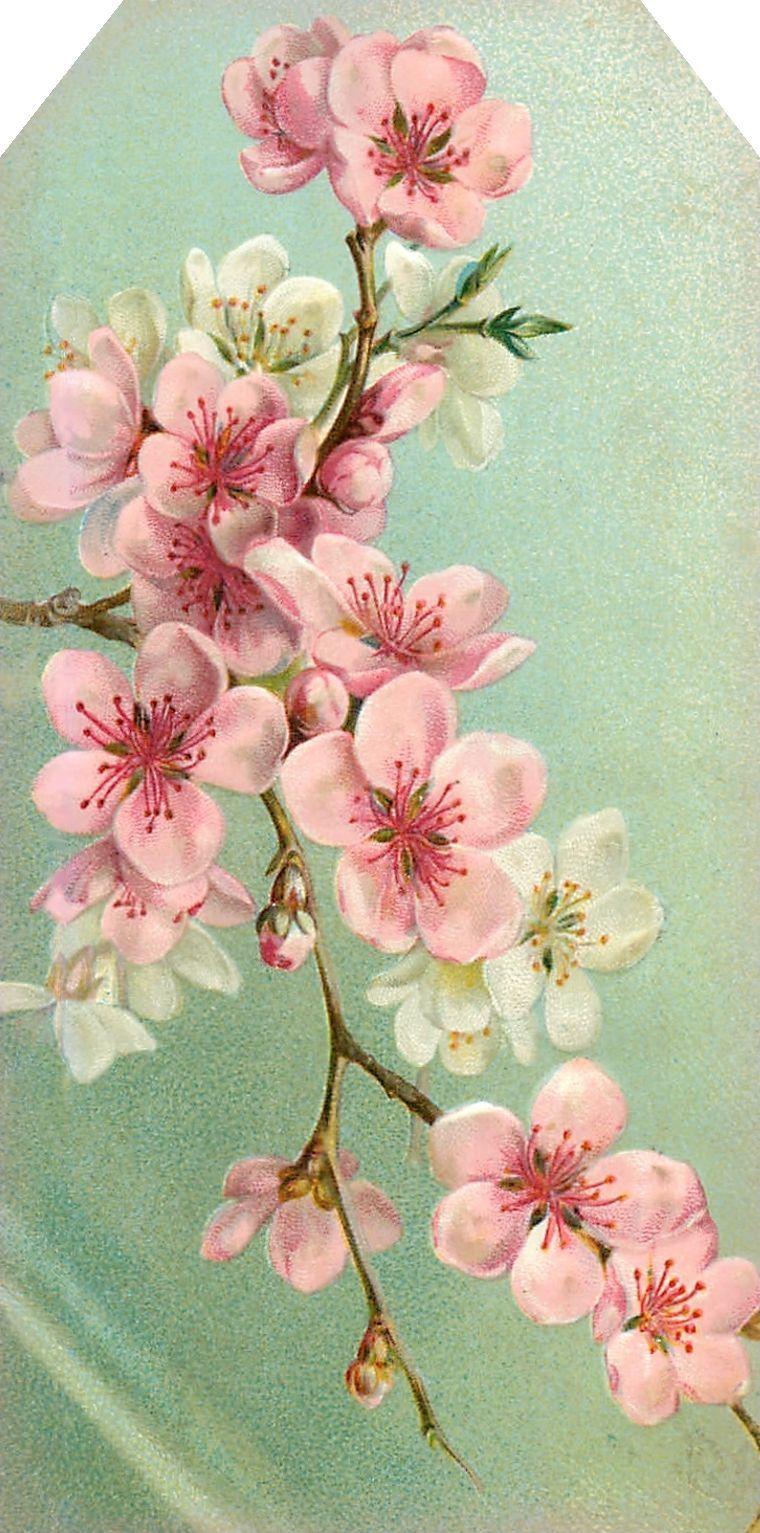 Flores De Almendro Decoracion Pinturas Flores Y Acuarela