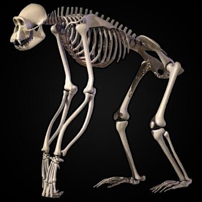 34+ Monkey anatomy ideas