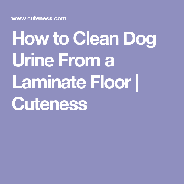 How to Clean Dog Urine From a Laminate Floor | Cuteness | good to ...