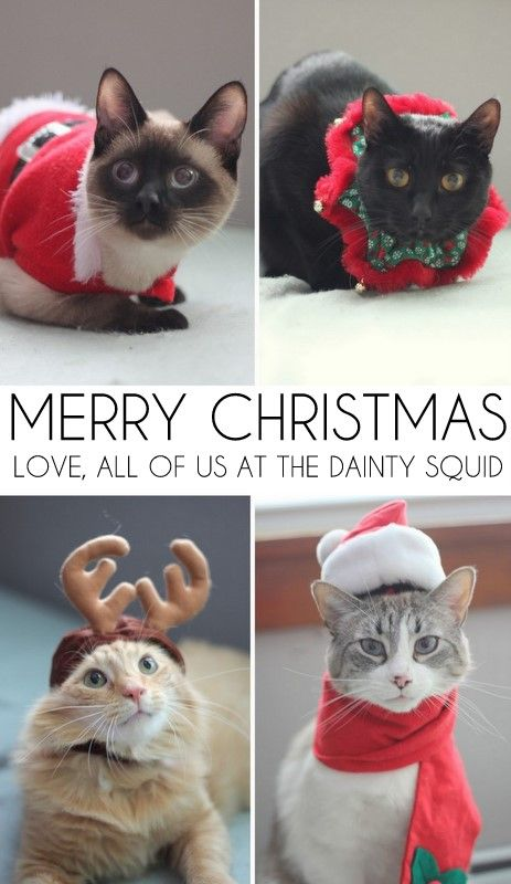 Christmas cat outfits - Christmas Cat Outfits Meow Meow! Pinterest Christmas Cats