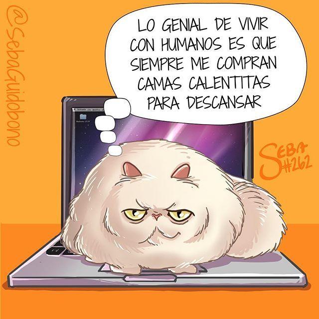 Los gatos y su manía de dormir sobre todo  #SebaDibujando #dibujo #gato #gatos #salidelacompu