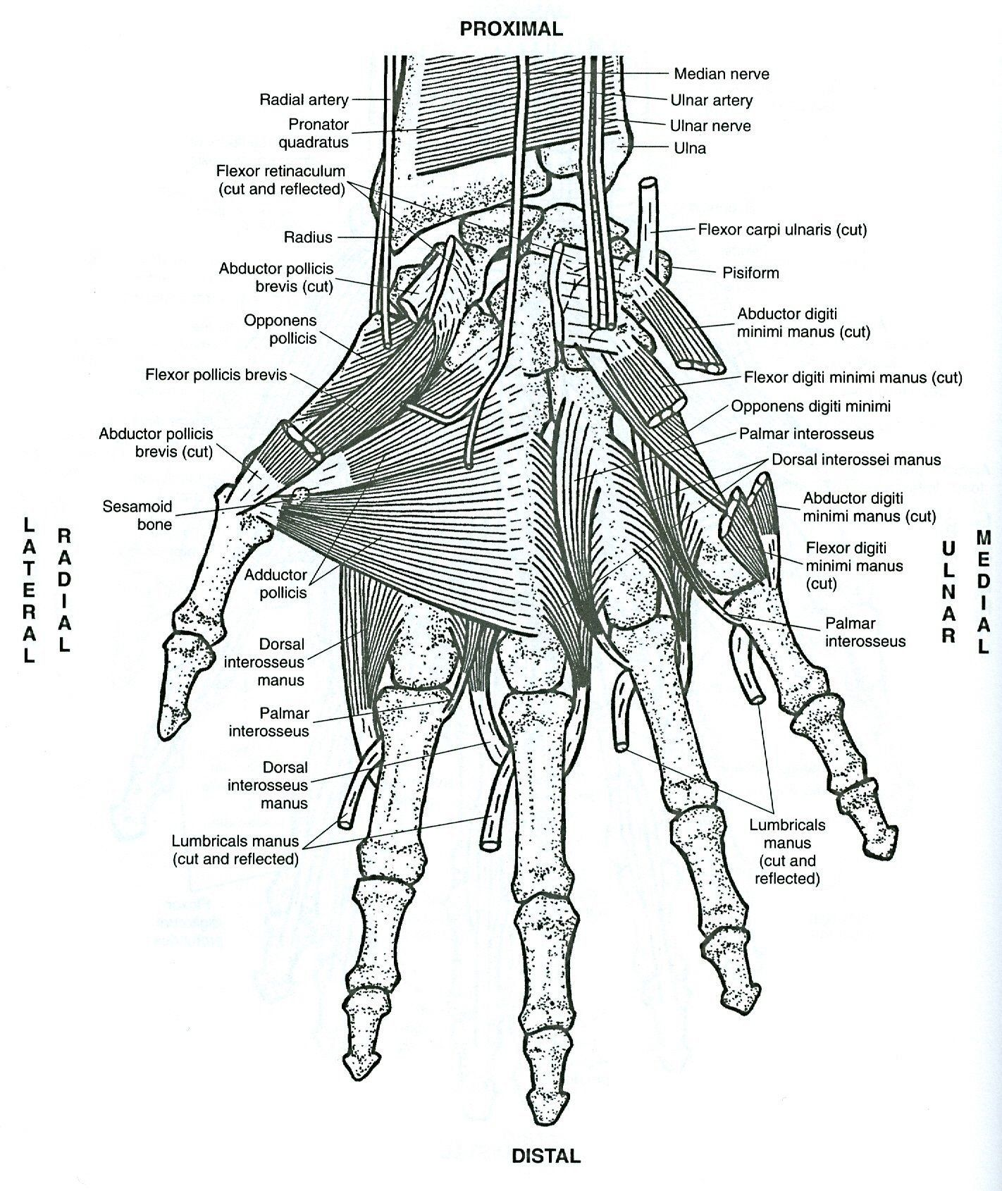Anatomy Coloring Book Pdf Awesome Greys Anatomy Coloring