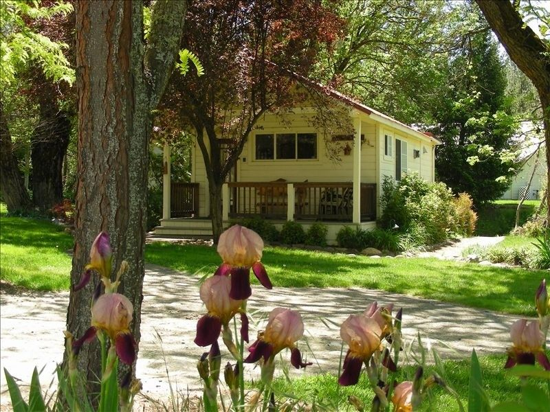Cabin Vacation Rental In Lewiston Ca Usa From Vrbo Com Vacation Rental Travel Vrbo Cabin Vacation Vacation Lewiston