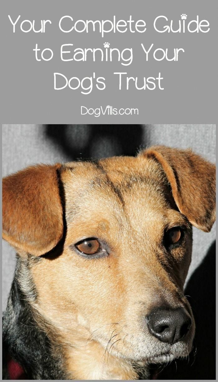 How Do You Earn A Dog S Trust Especially If That Dog Was