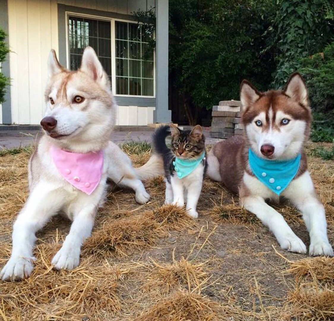 Family Cute Animals Dog Love Dogs