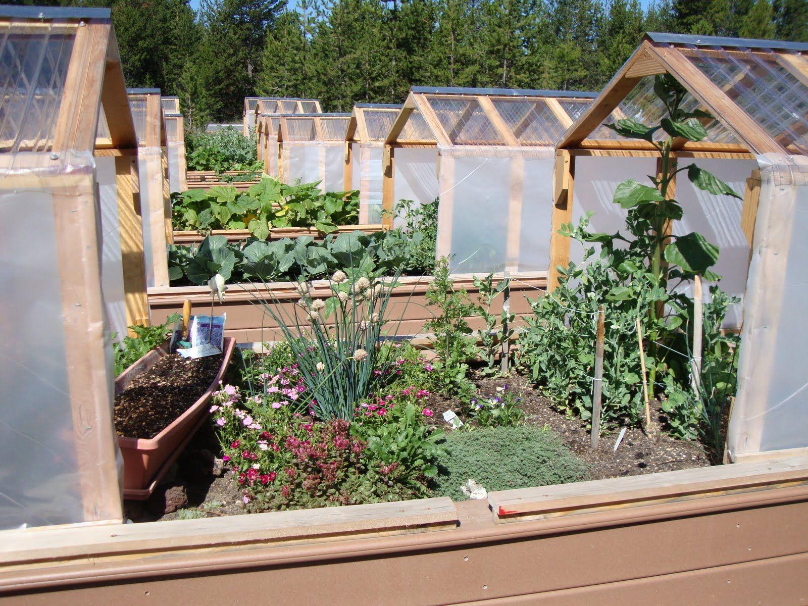 mini greenhouse mini greenhouses or raised beds both garden rh pinterest com