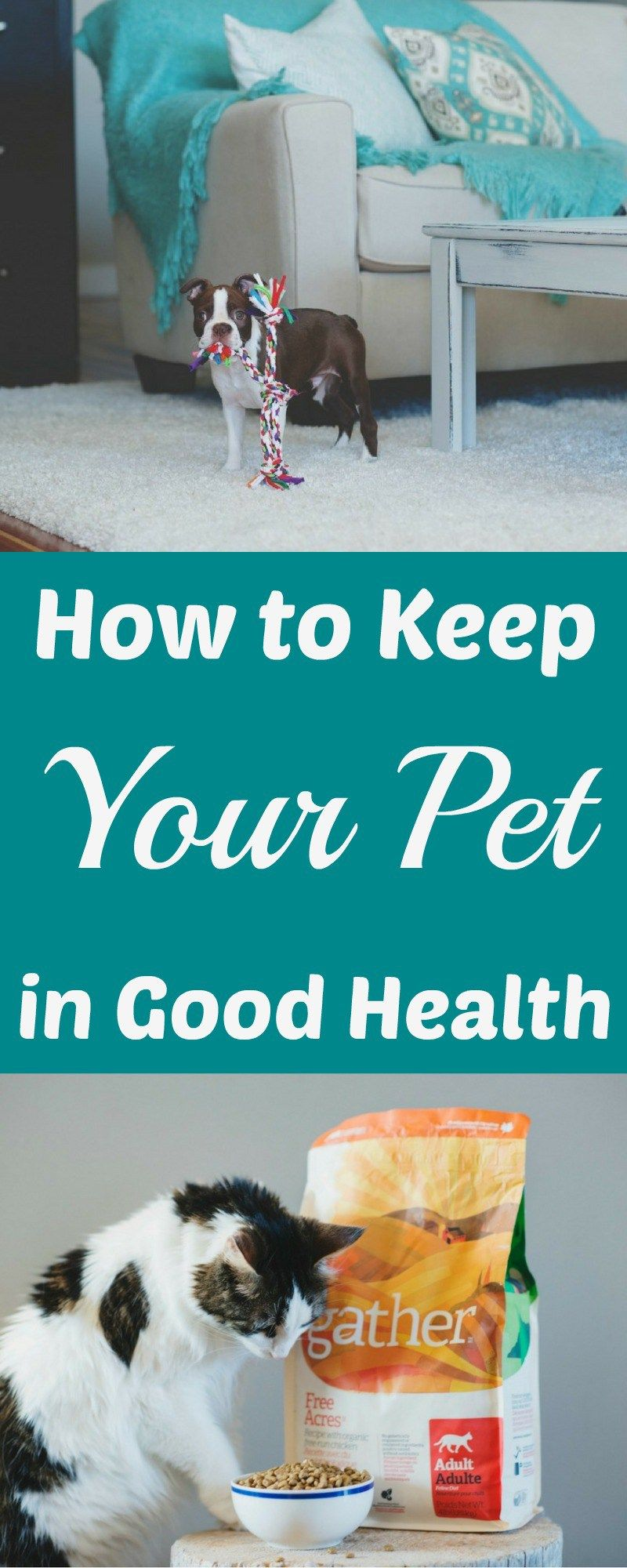 How to Keep Your Pet in Good Health Pets, Animals for