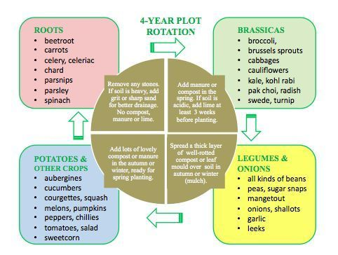 Four Year Crop Rotation  Gardening    Crop Rotation