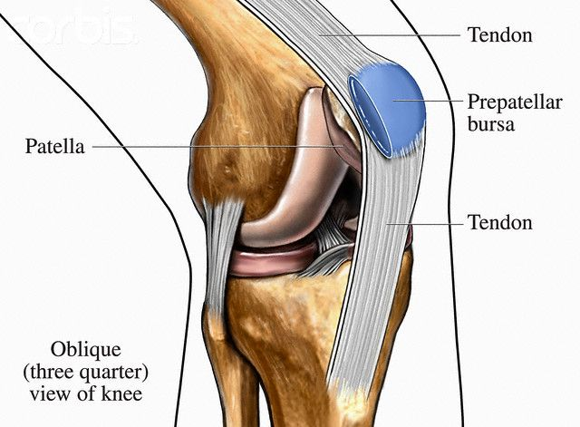 human knee anatomy diagram | ideas for the house | pinterest, Muscles