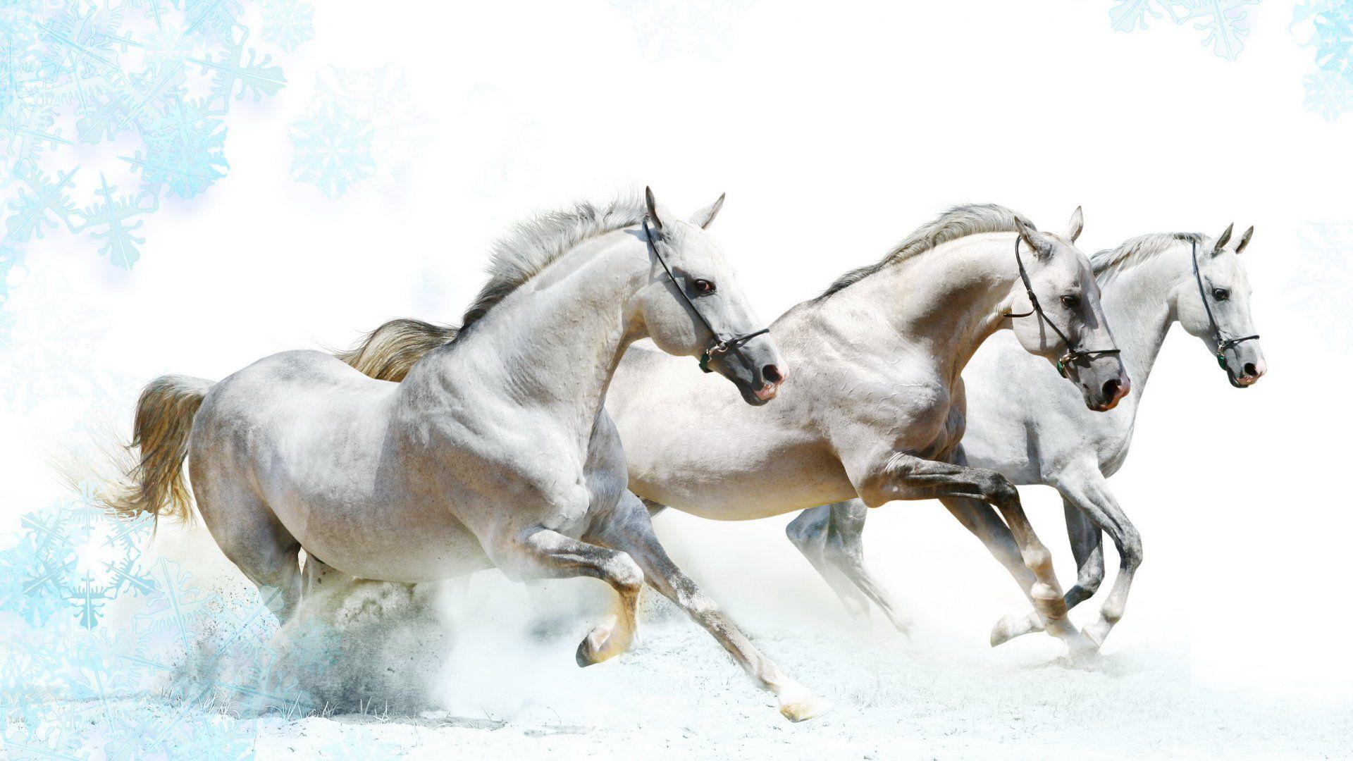 White Horses 2021 Live Wallpaper Hd Horse Wallpaper White Horses Horses