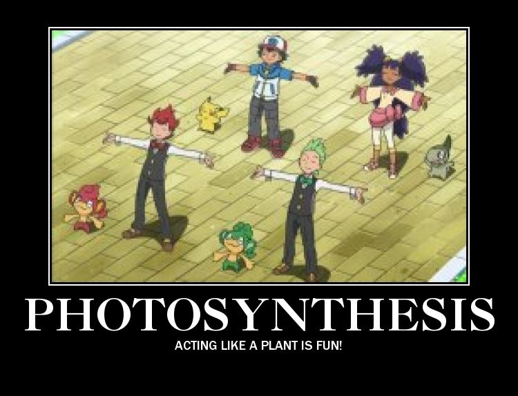 Photosynthesis By Flame Lampent Pokemon Pictures Pokemon Funny Pokemon