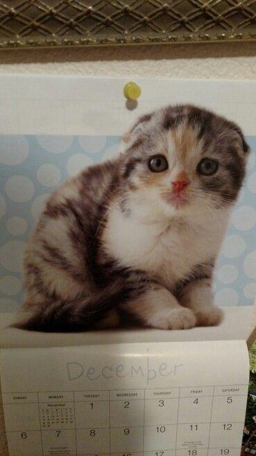 Found this on a kitty calendar