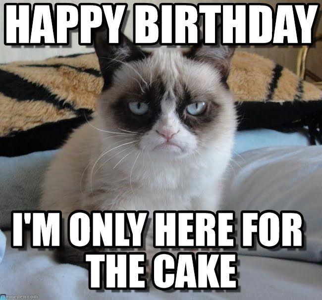 grumpy cat birthday   Grumpy Cat : Happy Birthday, I'm ...