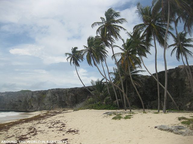 Amazing Things To See Do In Barbados Barbados Travel - 10 things to see and do in barbados