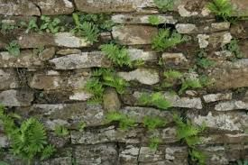 Image result for stone garden walls pictures